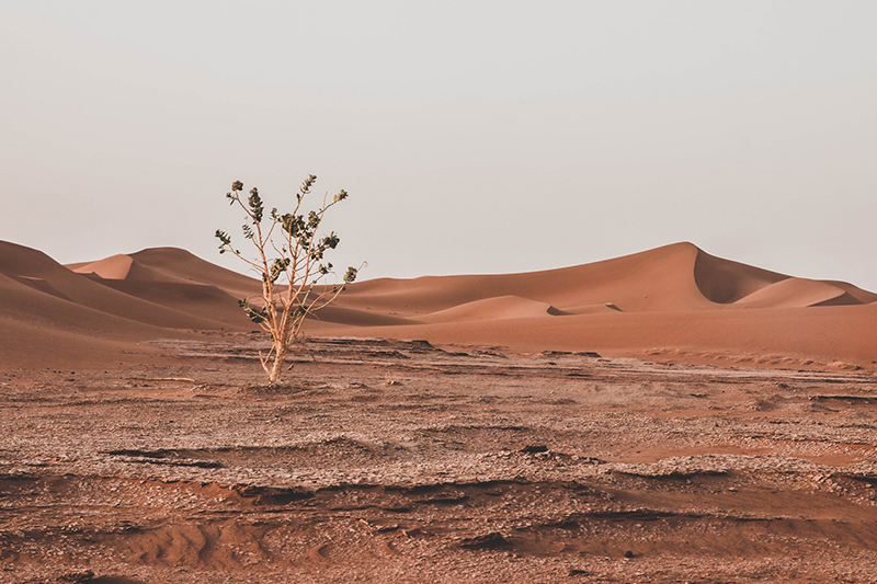 Roadtrip au Maroc
