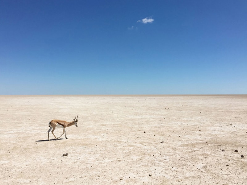 Roadtrip en Namibie