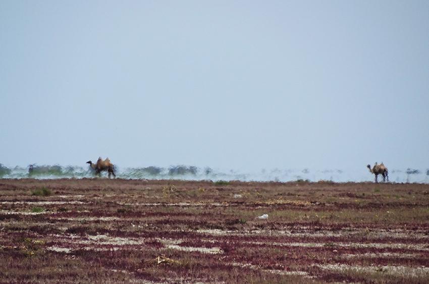 Chronique : Roadtrip en van au Kazakhstan – Une franche immersion en Asie centrale