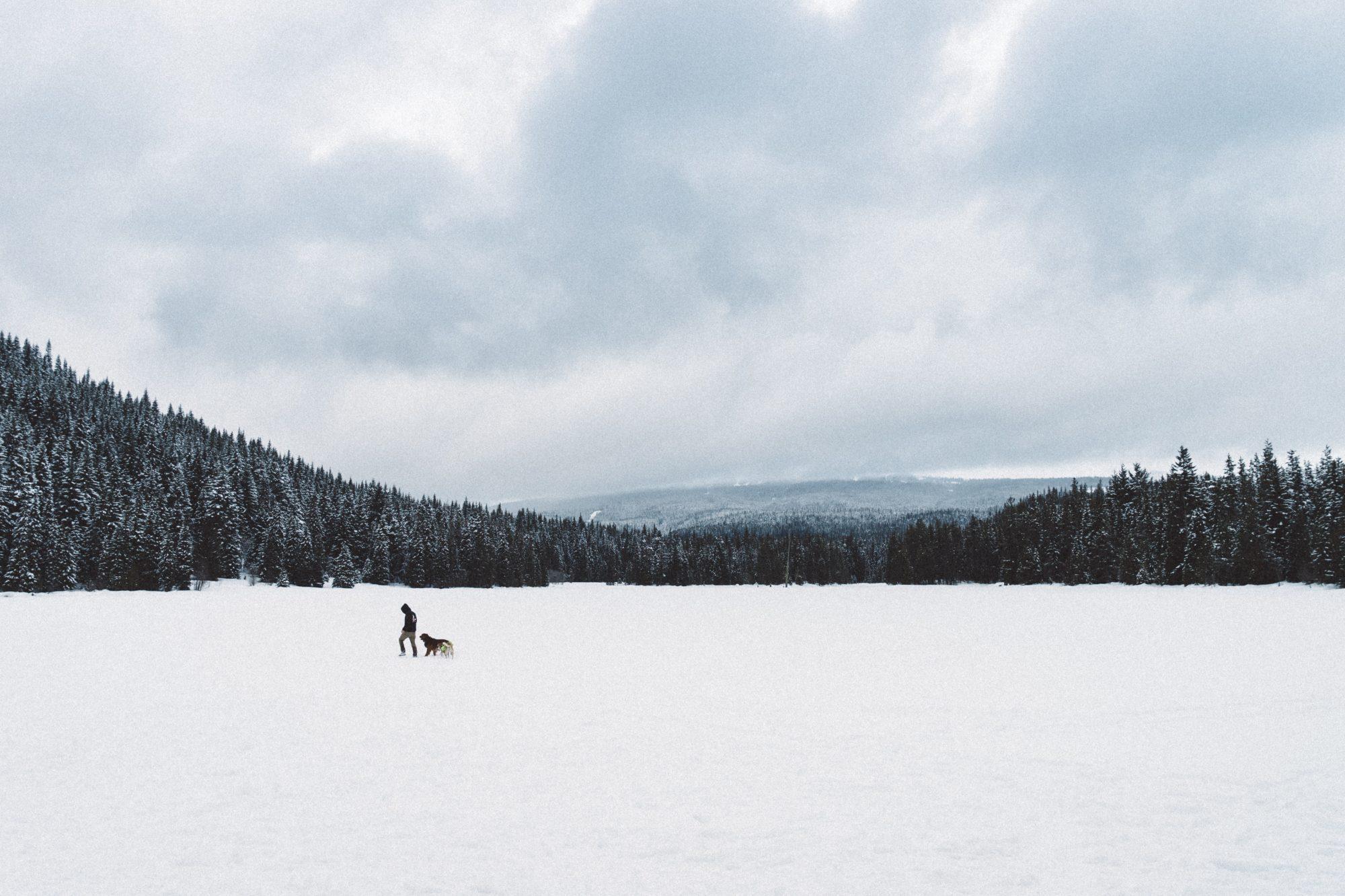 Faire un road trip au Canada avec son chien : Les formalités !