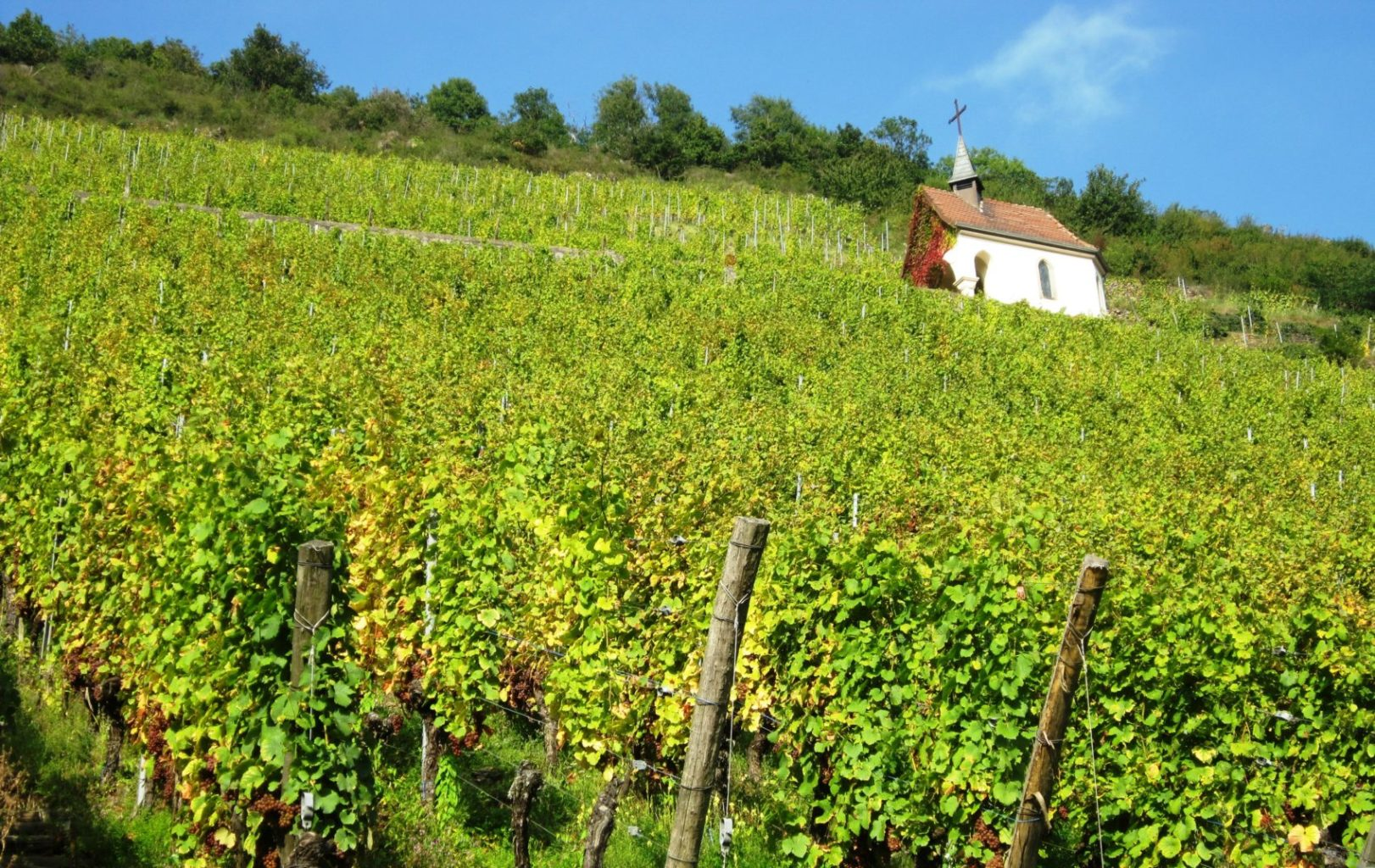 Les 10 plus beaux Road trip sur la Route du Vin !
